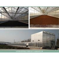 太阳能皮革污泥烘干温室